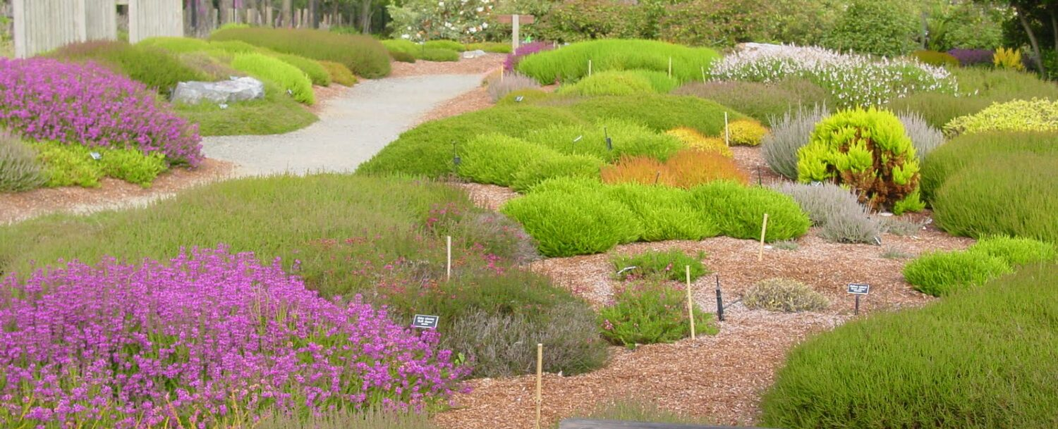 Heath & Heather Collection at the Mendocino Coast Botanical Gardens