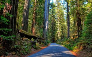 Avenue of the Giants Mendocino