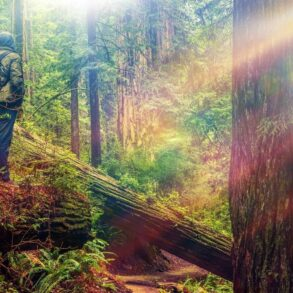 things to do in Fort Bragg, CA