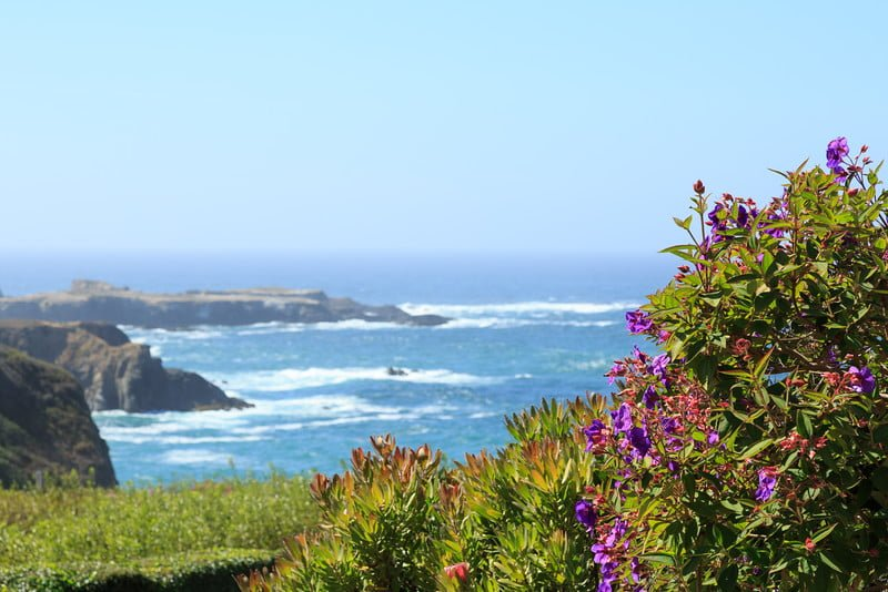 Searock- flowers with a view of the ocean -Mendocino Coast Garden Tour