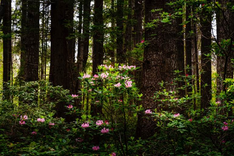 Mendocino Woods and Flowers