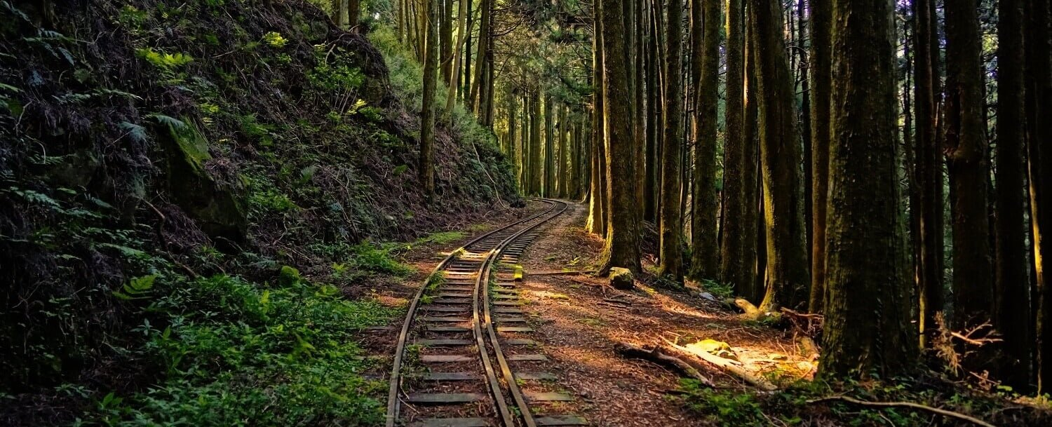Rail in the forest